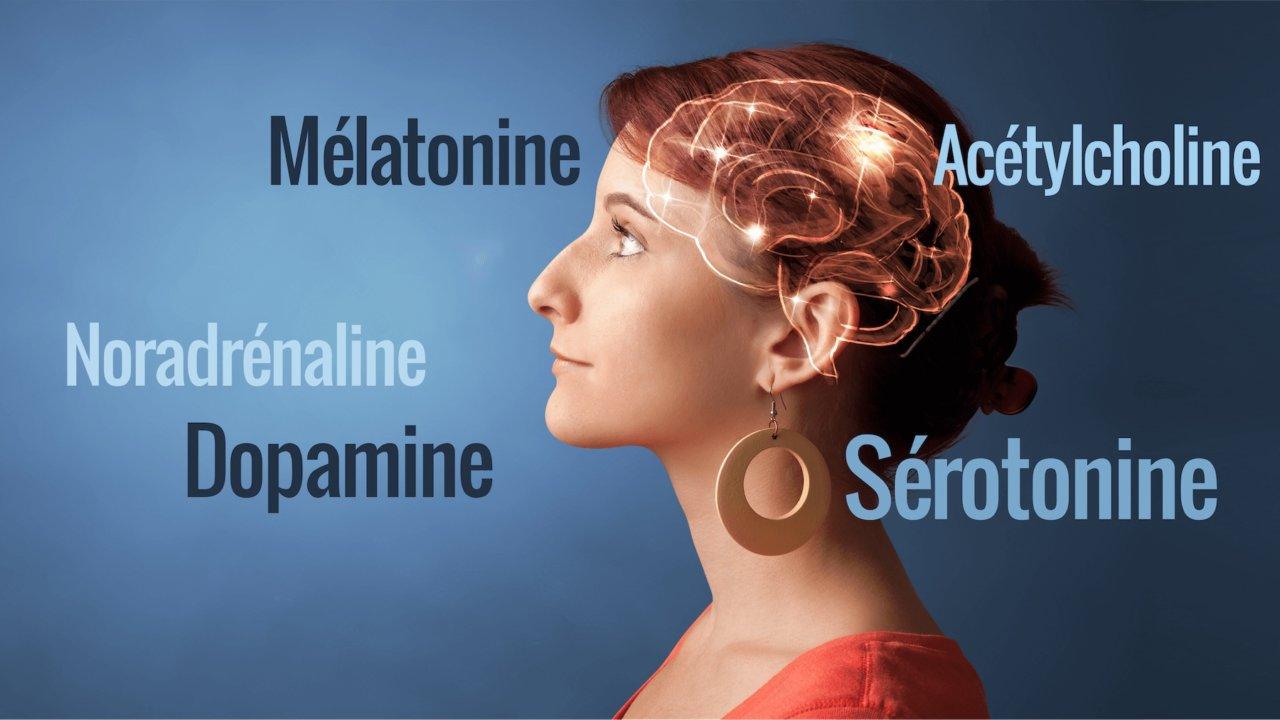 neurochimie du cerveau - BeBooda : formations en ligne